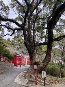 奥の院大樹